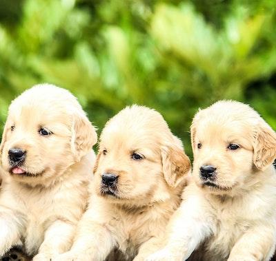 セブチメンバーが飼っている犬たち